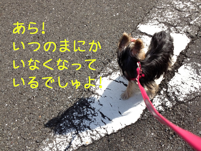 IMG_0692.jpg